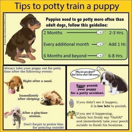 chart to assist with house training a puppy. Take puppy out to pee after each meal, after sleep and after play.